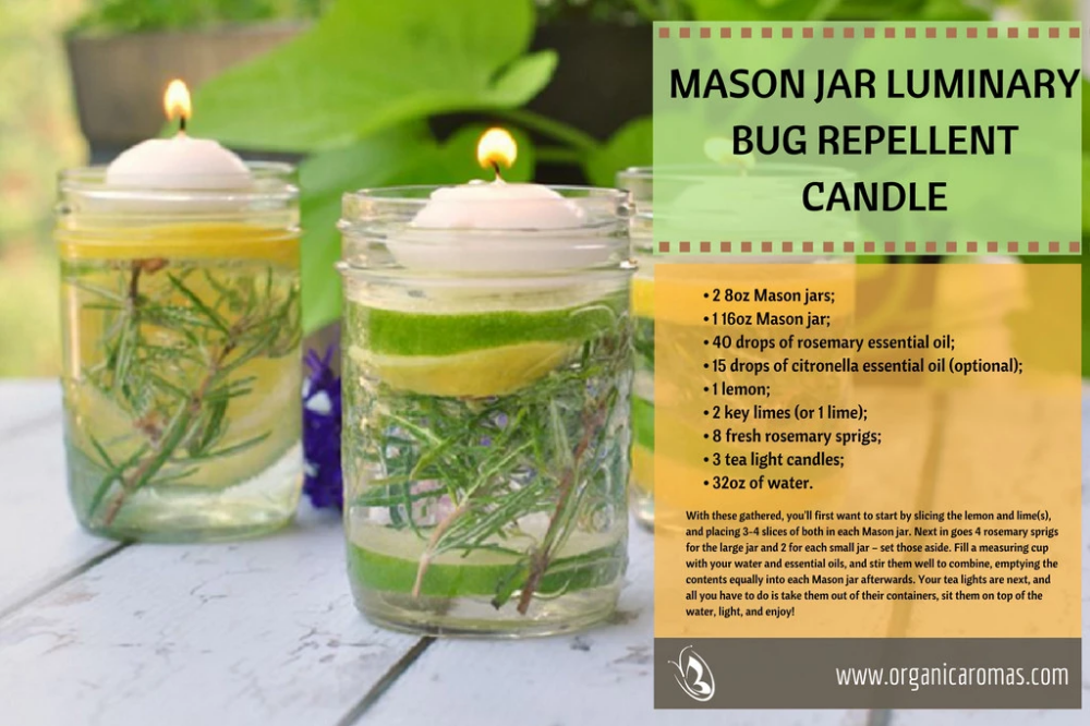Diy Natural Mosquito Repellent Using Essential Oils Natural
