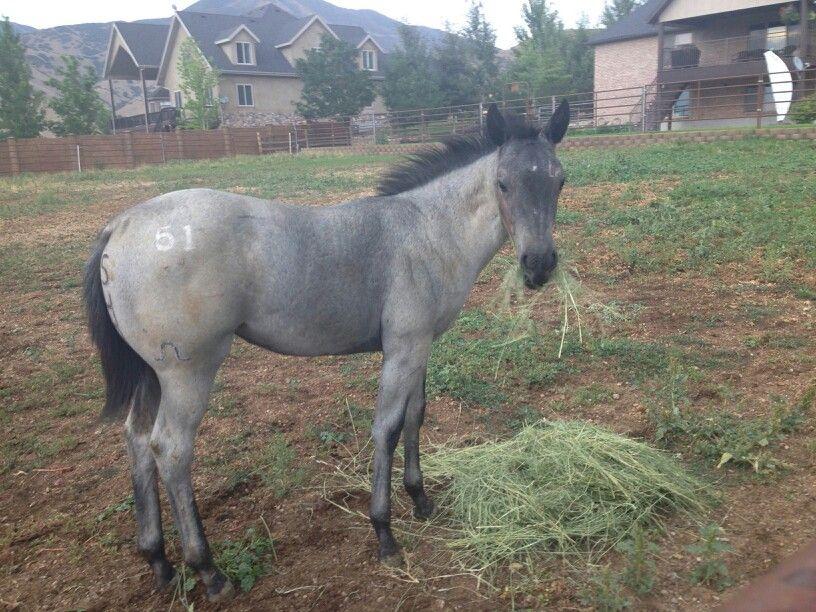 My new colt....
