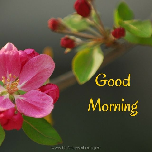Good Morning Flowers Quotes : Good morning quotes with beautiful flowers