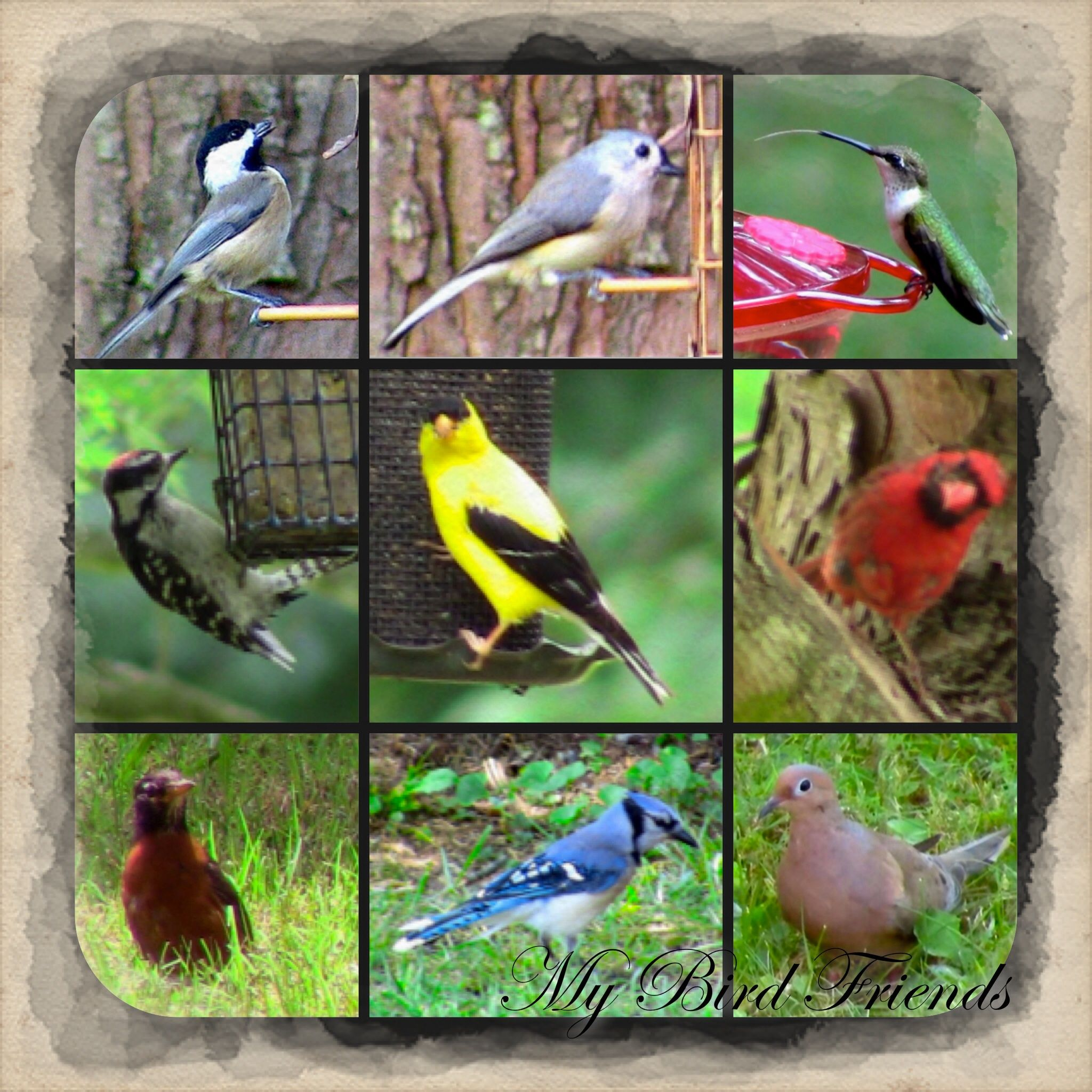 My feathered friends. Fuzel Pro app. My arts, Art, Animals