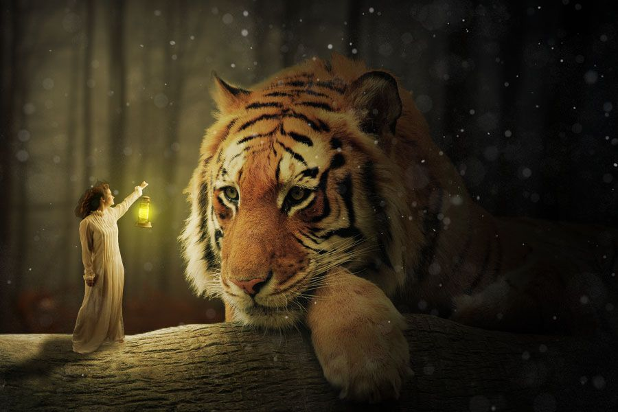 Animals image by Yolien Perezcassar Tiger wallpaper