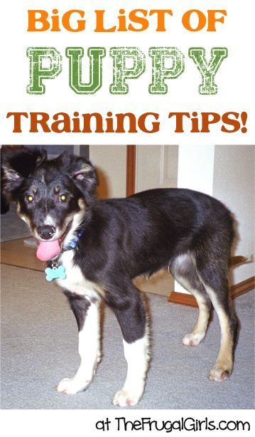 Creative Dog Training Tips And Tricks Puppy Training Tips
