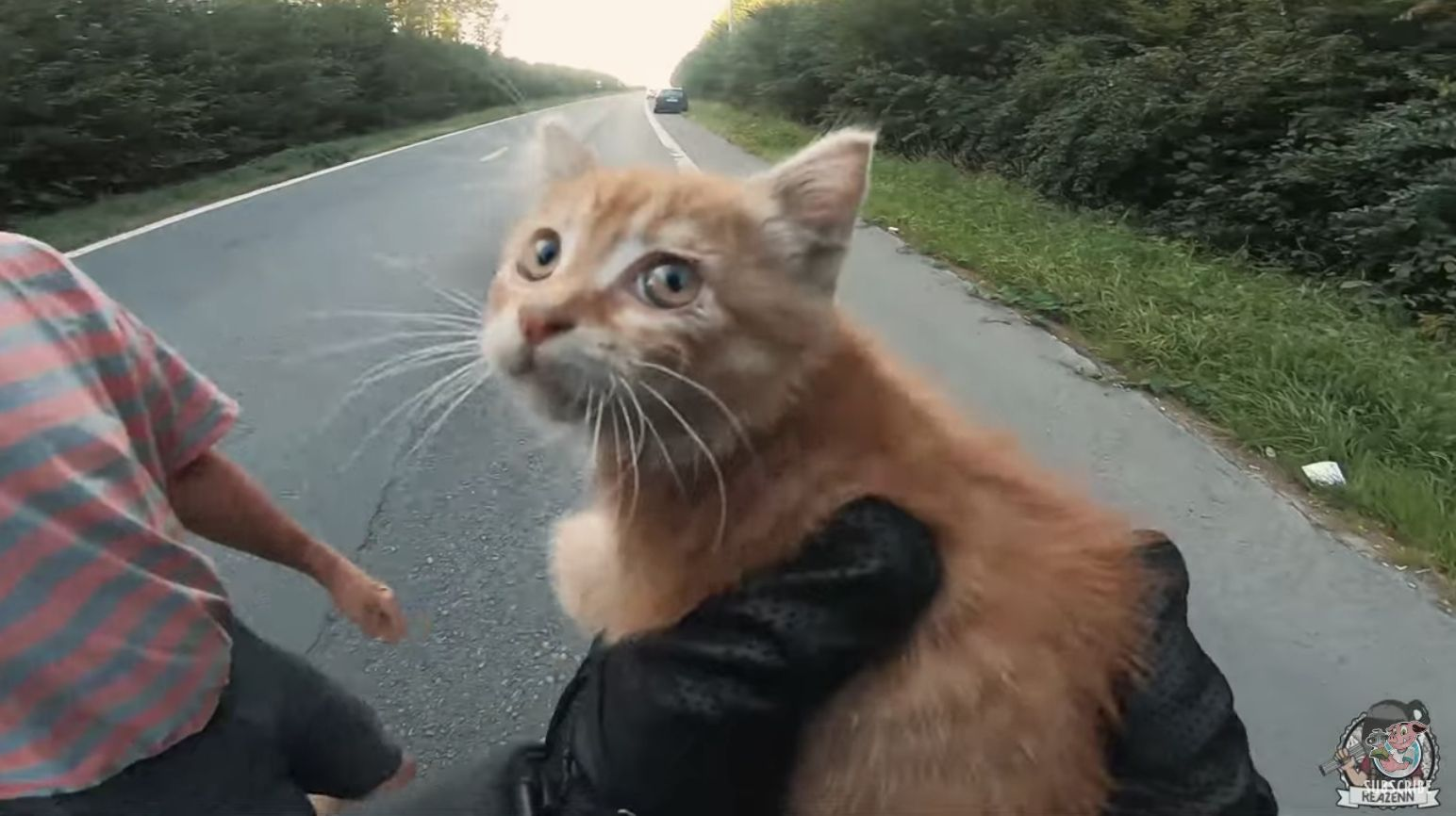 Quick Thinking Motorcyclist Rescues Tiny Kitten Kitten Rescue Kittens Tiny Kitten