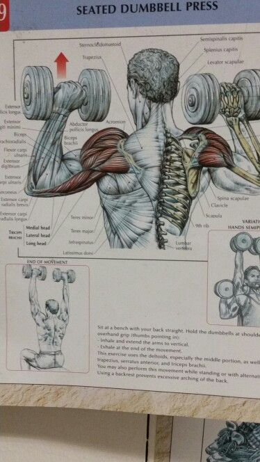 Seated Dumbell Shoulder Press Arms Pinterest Gym Routine Gym