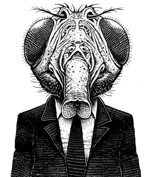 Resultado De Imagen De Mosca Draw Desenho Ilustracao Ilustracoes
