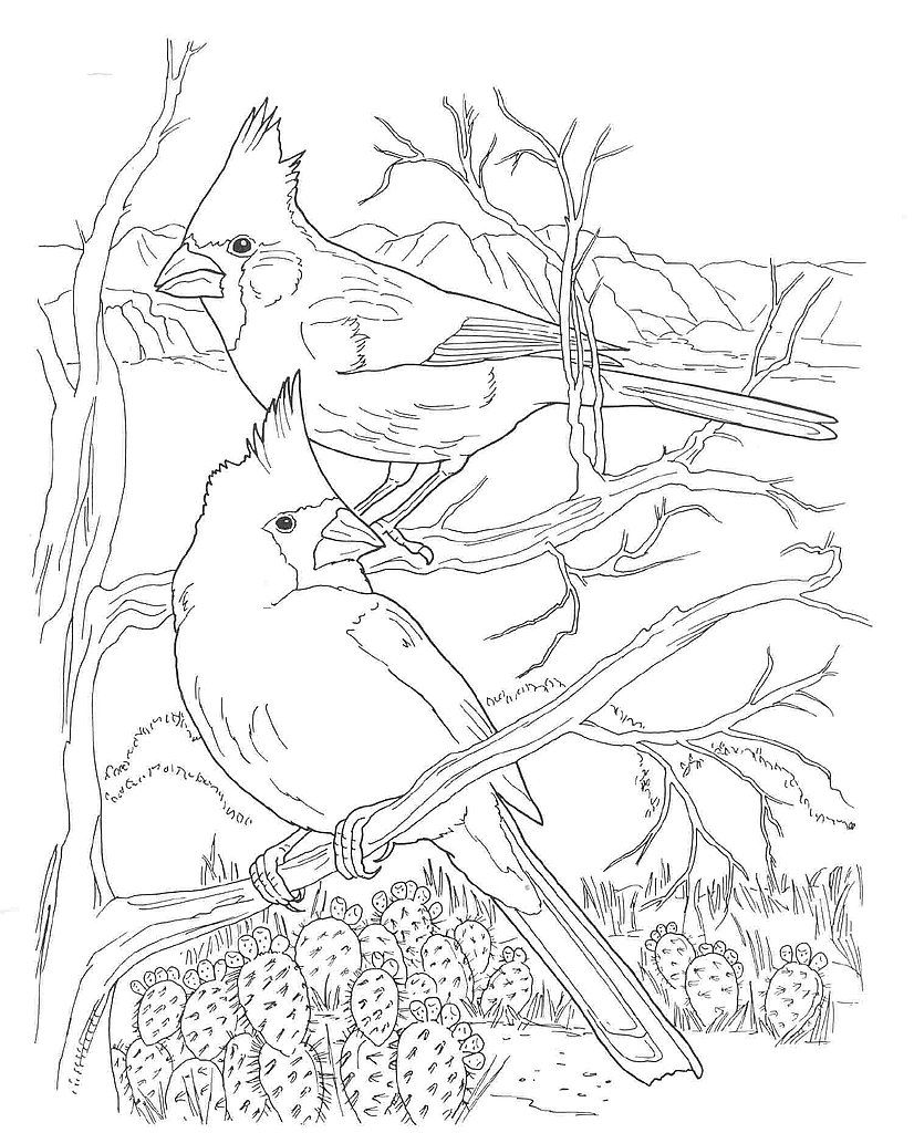 Desert Animals Coloring Pages Northern Cardinal Animal Coloring Pages Bird Coloring Pages Bird Drawings