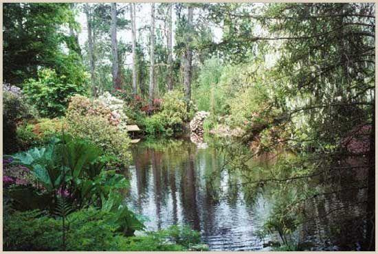 Pond ripples at Sonoma Horticultural Nursery, Sebastopol, CA www.sonomahort.com