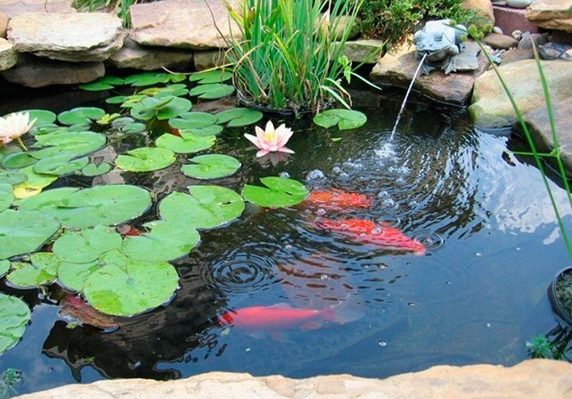 Pasos a seguir para construir estanques de jardín Pinterest