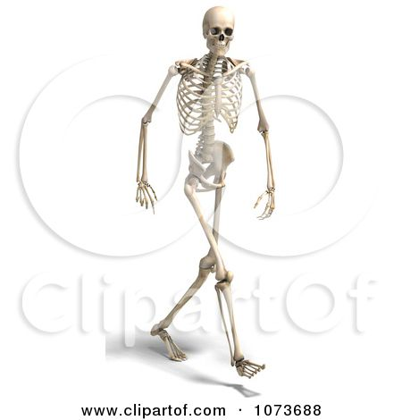 clipart 3d human male skeleton walking 2 - royalty free cgi, Skeleton