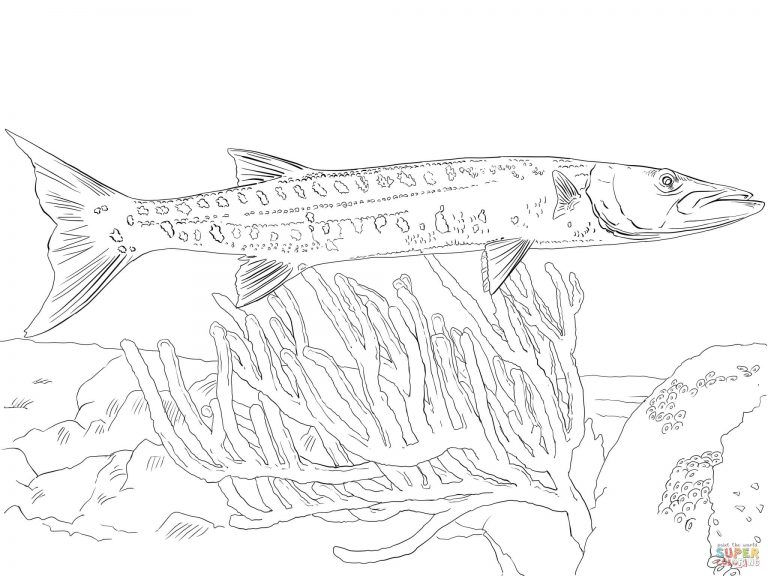 Free Printable Coloring Pages Intended For Barracuda And Remora Fishes Coloring Pages