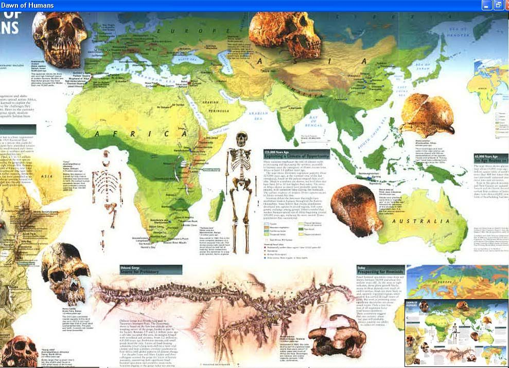 Map Human Evolution All humans on Earth originated from