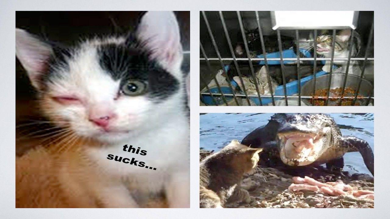 Feline Health Behavior And Stress In The Shelter Feline Health Feline Animal Shelter
