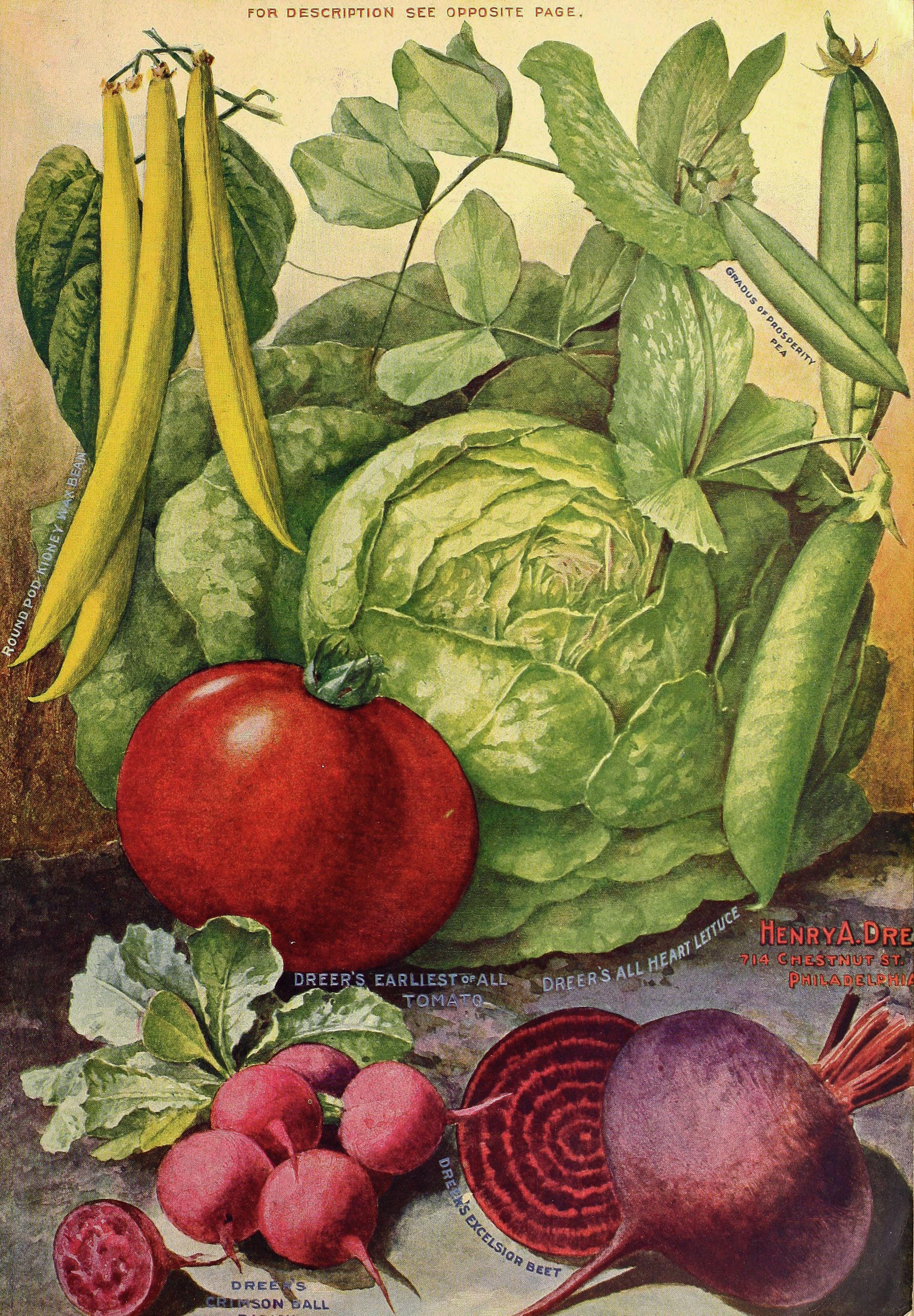 1902 Henry A. Dreer Vegetable Seed Catalog illustration ...