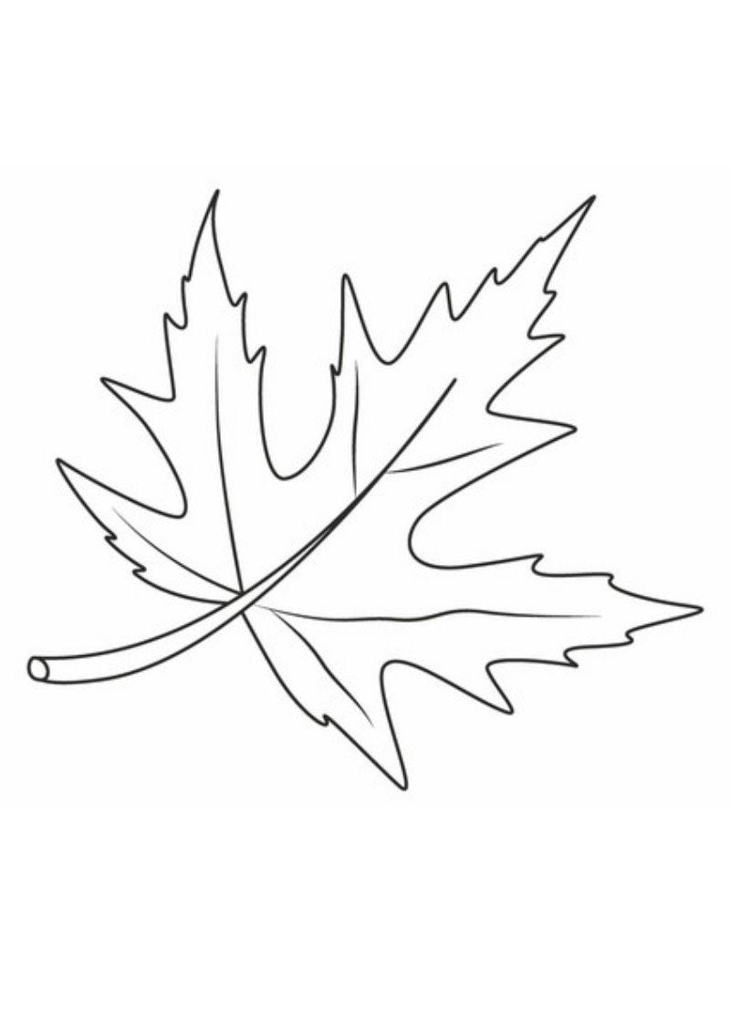Jesien Kolorowanka Dzien Drzewa Jesien Kolorowanki Swieta I Pory Roku Wrzesien Autumn Leaf Color Leaf Template Printable Fall Coloring Pages