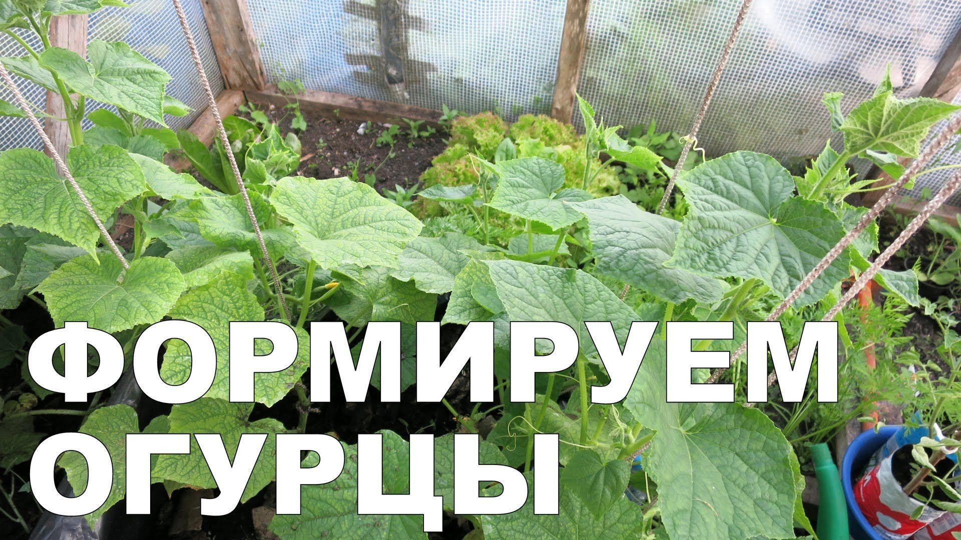 Как формировать огурцы?! / How to shape cucumbers?!