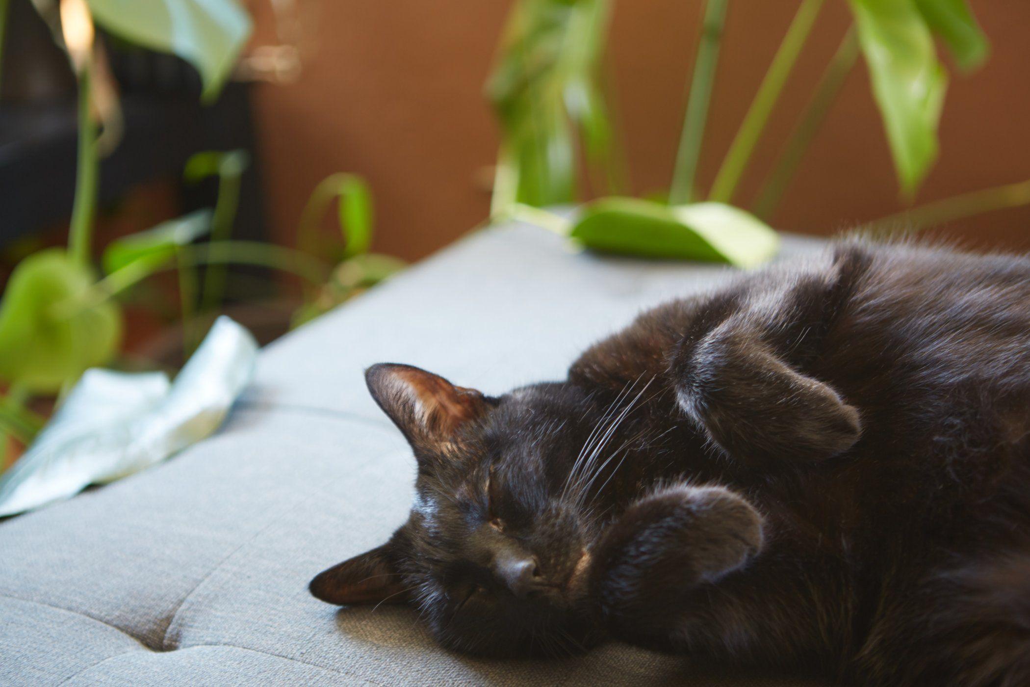 Infographic The Healing Power of Cat Purrs Katzenworld