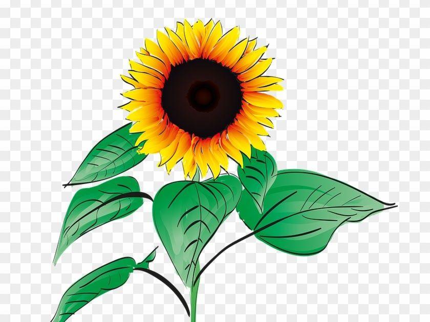Terkeren 27 Gambar Bunga Matahari Kartun Png Jelajahi Koleksi Gambar Png Cahaya Kuning Sinar Matahari Kami Yang Lukisan Bunga Matahari Menggambar Bunga Bunga