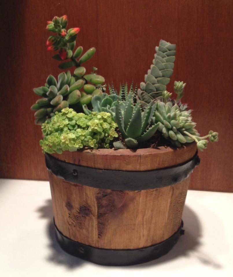 Centro de mesa plantas naturales recuerdo toda ocasi n for Centros de mesa con plantas naturales