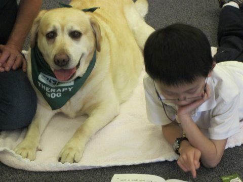Dog Training Attention Dog Training Spray Dog Training Clickers