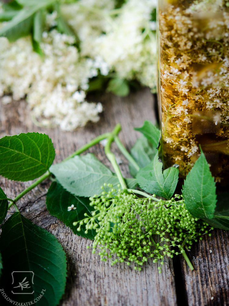 Nalewka Z Bzu Czarnego Czesc Druga Herbs Polish Recipes Elderberry Season