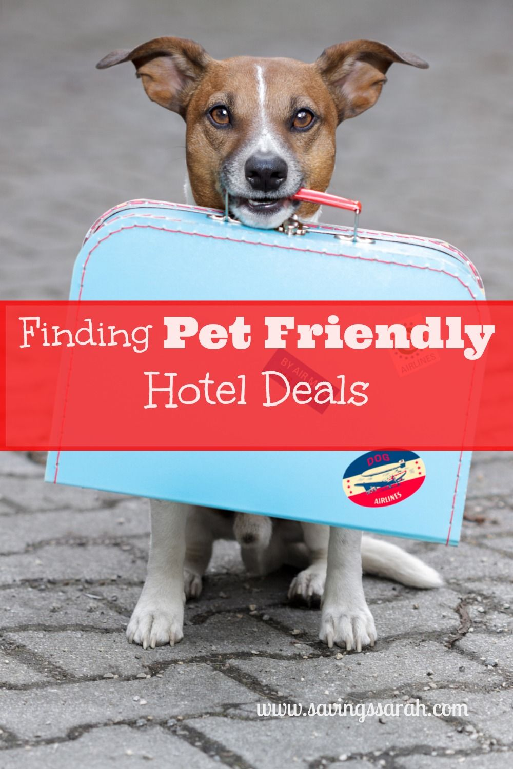 Between Holiday And Vacation Travel You May Want To Take Your Pets Along For The Trip Here Are Three Tips Finding Pet Friendly Hotel Deals When