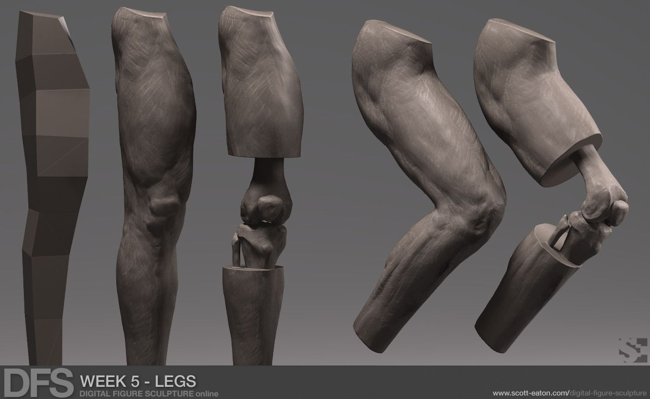 knee sculpting - Google Search | reference | Pinterest | Anatomie ...