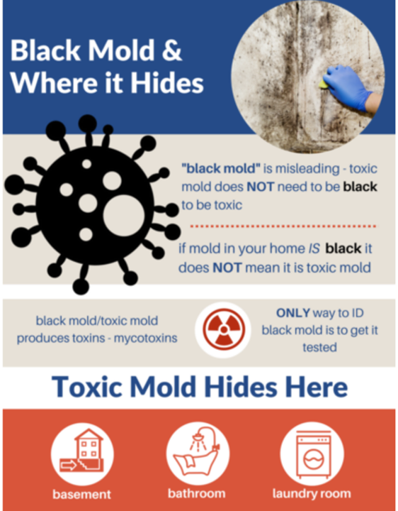 Connect With Experts At Iowa Mold Removal Services And Get A No Cost Walls Health Inspection Your