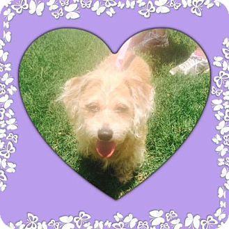 Ocala Fl Dachshund Mix Meet Reah A Dog For Adoption Http
