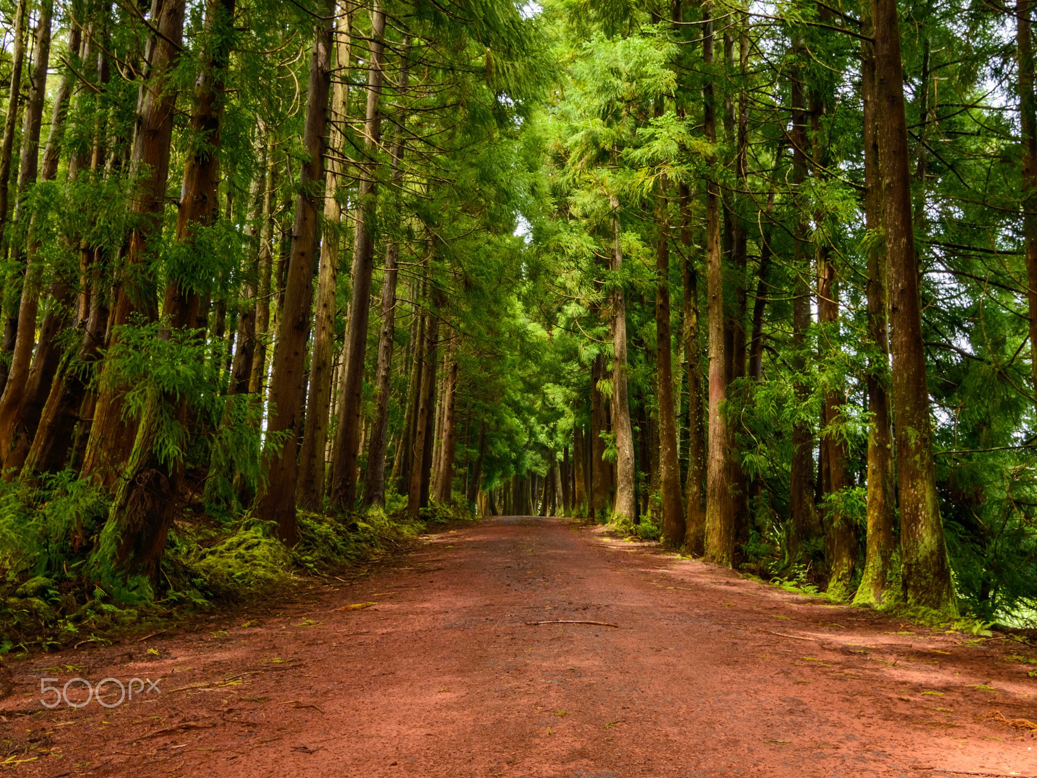 The Azorean Road - Like everywere the roads are made with the matereals the Earth gives to Us. In Azores its used red vulcanic scoria to make some of the less important interior roads, making this beautiful  green and red contrast.