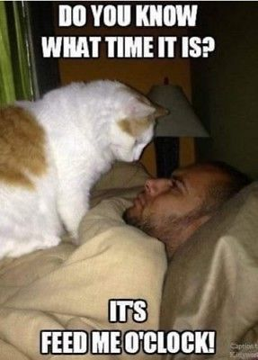 FUNNY CAT MEME FEED ME O'CLOCK FRIDGE MAGNET 5' X 3.5'