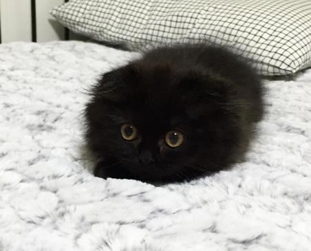 Kennst Du Schon Dieses Tierchen Es Ist Etwas Ganz Besonderes Susse Katzen Katzen Katzen Miauen
