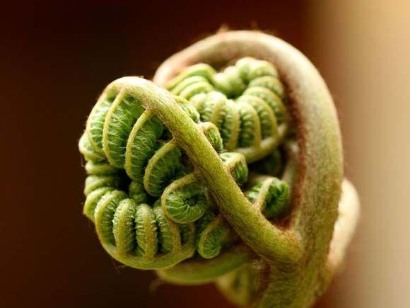 Love budding ferns! Great subject matter.
