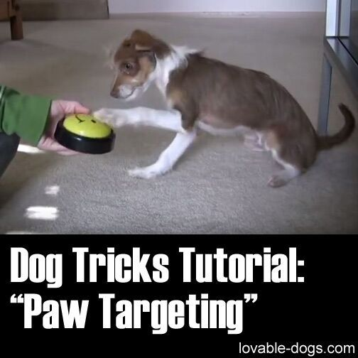 Pin By Charles Reed On Lovable Dogs Dog Hacks Dog Training Dogs