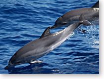 How A Port Aransas Dolphin Tour Lets You Experience Dolphins In