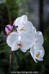 orchideen pflege #orchideenpflege Phalaenopsis Orchideen Pflege. Orchideenpflege fr Anfnger. Erfahren Sie alles was Sie brauchen um #decorationideas #livingroomdecor #designlogo #designgrafico #designspiration #nailoftheday #nailbar #nailitdaily #nailartclub #nailaddict #designerclothes #nailstyle #nailswag #nailsoftheday #nailsonpoint