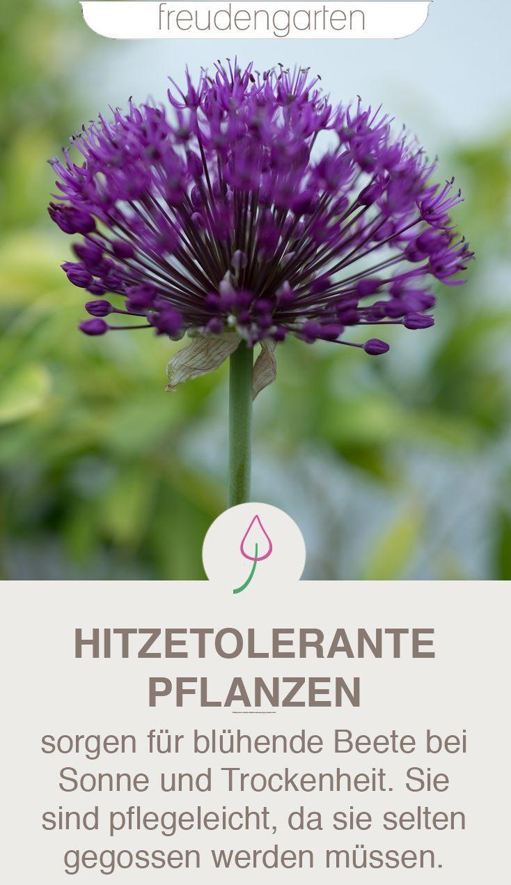 Pflanzen für trockene und sonnige Standorte