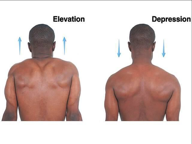 Image result for joint elevation and depression