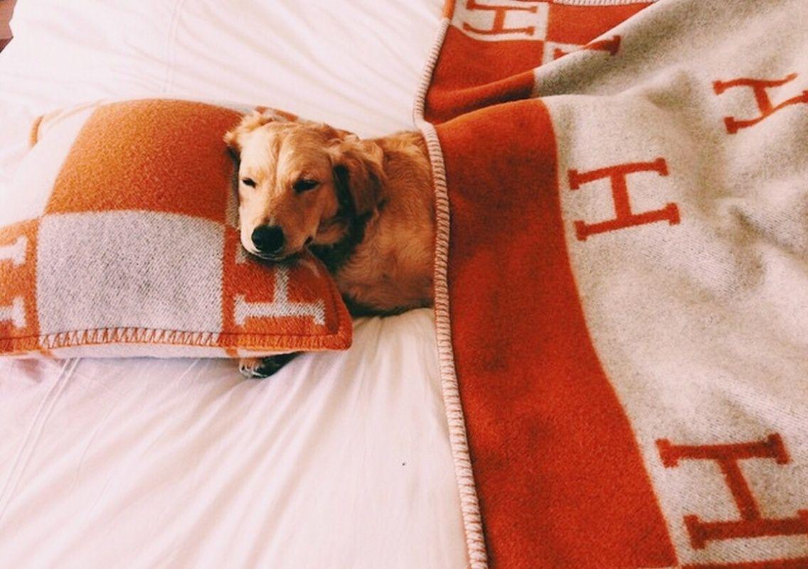 VSCO relatablemoods Cute animal memes, Puppies, Girl