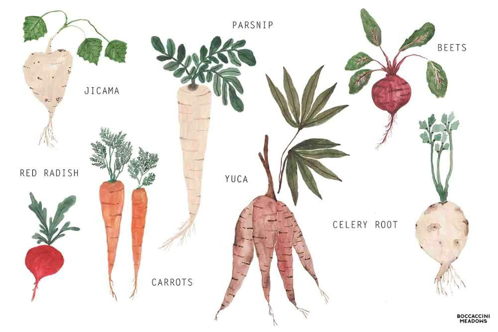 Root Vegetables: The Underground Economy | Sun Basket ...