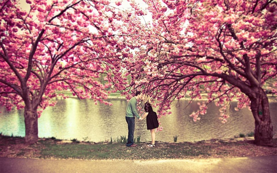 sweet photo kiss under the cherry blossom by korri crowley