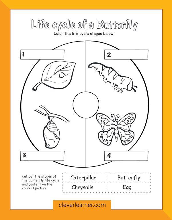 Butterfly life cycle preschool worksheet. #preschool # ...