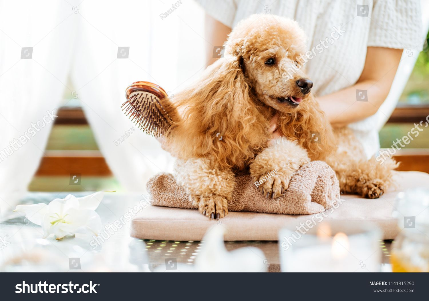 Woman Scratching Dog With A Brush Spa Still Life With Aromatic Candles Flowers And Towel Brush Spa Dog Woman Still Life Dogs Spa