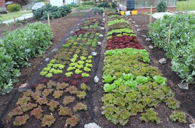Indie Farmer Gardening Myths And Misconceptions Posted 10 03
