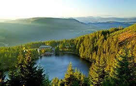 Germany!  This is where Black Forest cake comes from.
