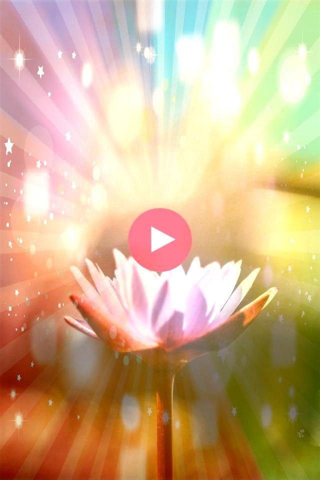 Went to India for 10 Days of Silent MeditationI Went to India for 10 Days of Silent Meditation Foto  CloseUp Side View Pink Lily In Pond Green Blurry Background Canvas Ar...