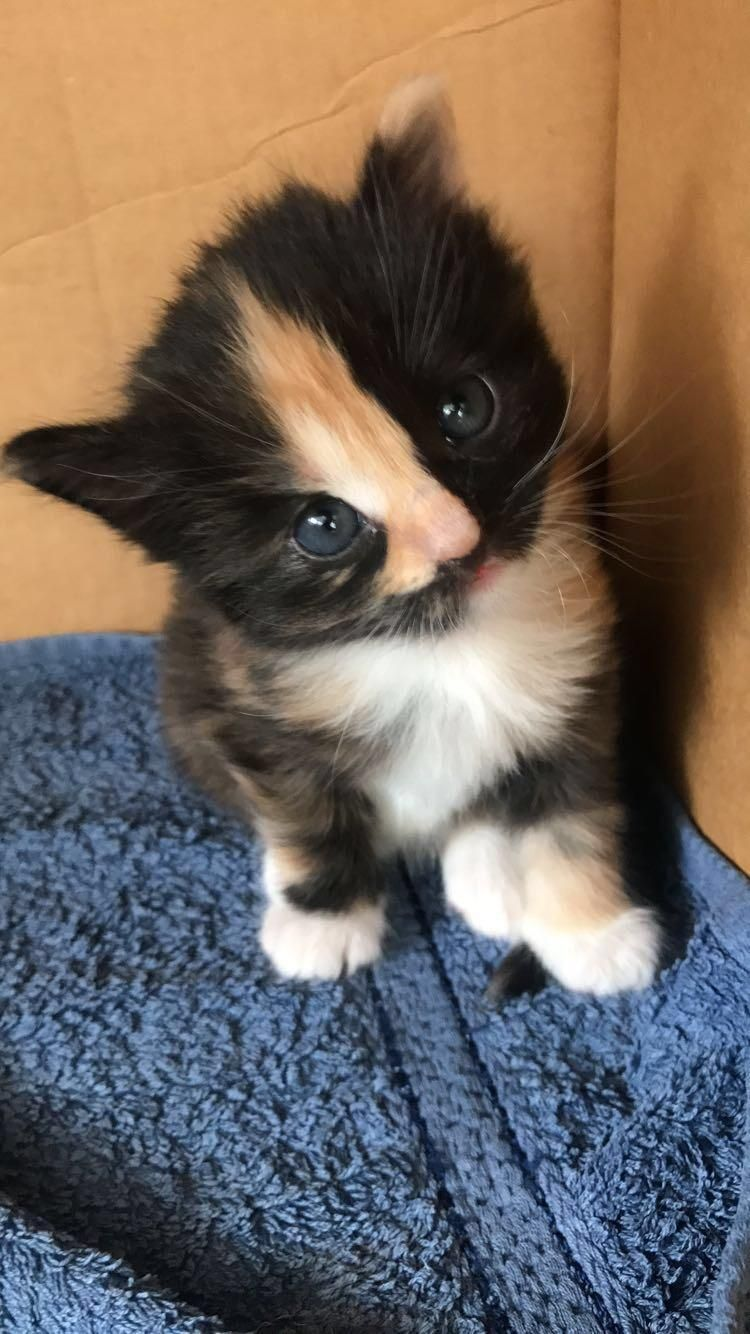 This Little Lady Turns 4 Weeks Old Today Https Ift Tt 2hbrblc Cute Puppies Cats Animals Cute Animals Beautiful Cats Kittens Cutest