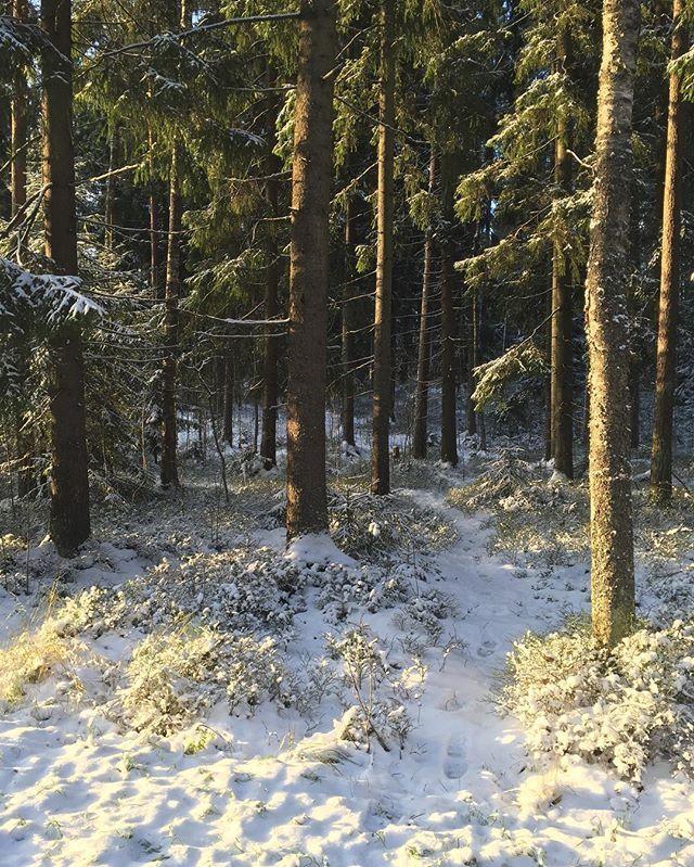 Metsä on ihmisen paras paikka! Kodin ja merenrannan jälkeen..💙😉 #forest#finland#suomi100#finnishnature#finland_photolovers#totalfinland#thisisfinland#metsä#talvi#