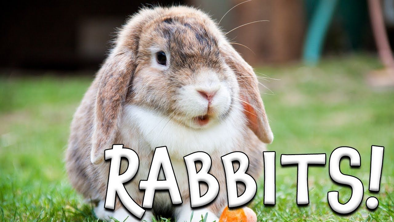 Rabbits Learn About Rabbits For Kids Youtube In 2020 Animal Learning Cute Baby Bunnies Rabbit