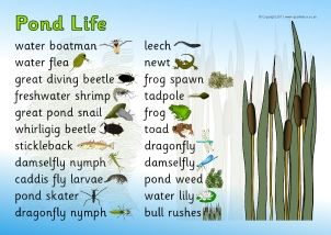 Pond Life @ http://www.sparklebox.co.uk/topic/living/minibeasts/pond-life.html#.VcTUc3FVhBc