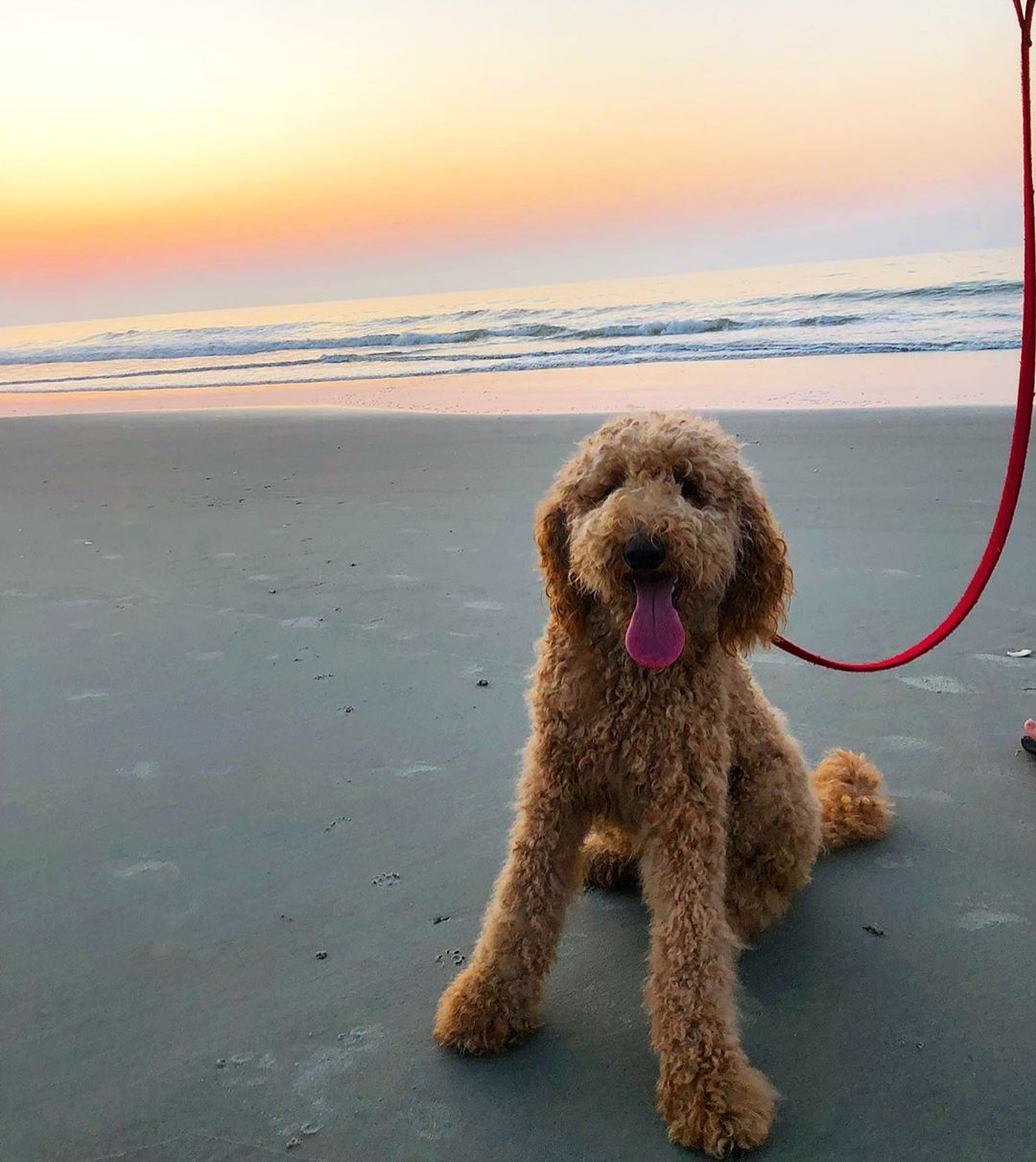 Dogs dig hammock coast and our petfriendly beaches